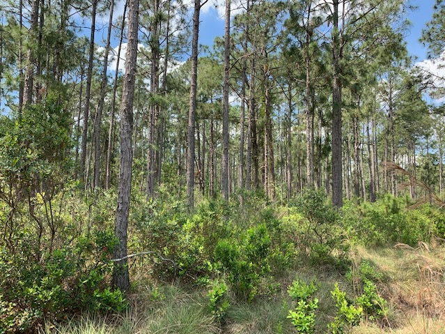 River Ranch Acres Camp lots for sale atv hunt Florida